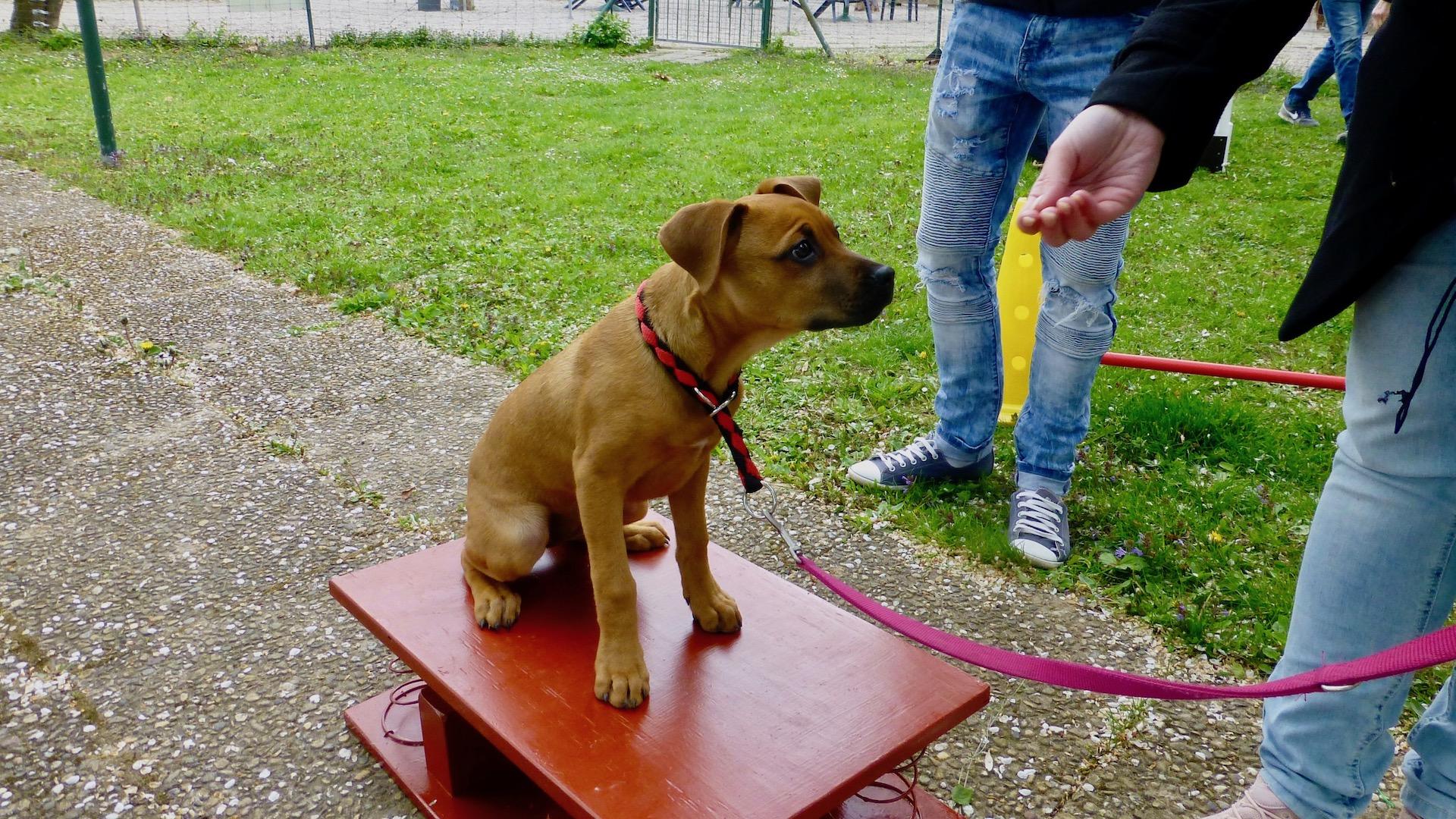 Anmeldung zum  KIDS 'N' DOGS – Workshop Sommerferien 2019