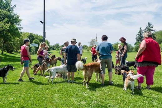 2017 Tag des Hundes Galerie 3 14