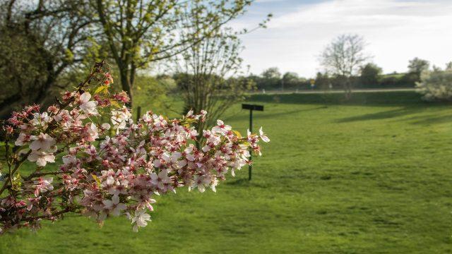 Einladung zum Frühlingsfest 2019